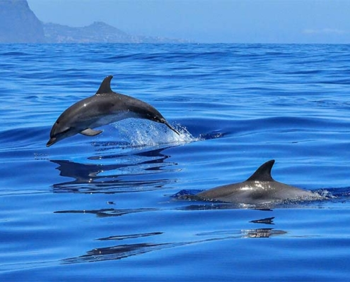 Dolphins, Animal Watching Andalusia